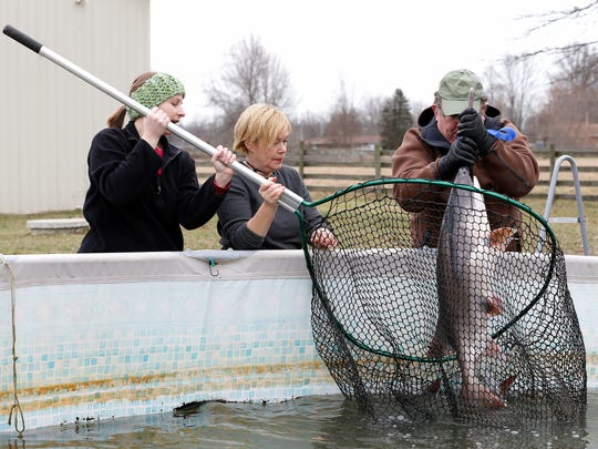 Megan Groves, left, Renee Koerner, and Keith Koerner remove a paddlefish before they harvest the caviar at Big Fish Farms in Bethel Wednesday January 30, 2017. Ten years ago Koerner founded Big Fish Farms that produces farm-raised paddlefish products. The company sells caviar and the meat to local markets.