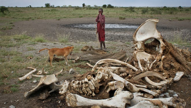A Maasai boy and his dog stand near the skeleton of an elephant killed by poachers outside of Arusha, Tanzania, on Feb. 13, 2013.
