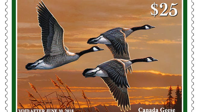 The 2017-'18 Federal Duck Stamp shows a trio of Canada geese. The original was painted by wildlife artist James Hautman of Chaska, Minn.
