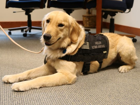 Helen, a victims' assistance dog who began working