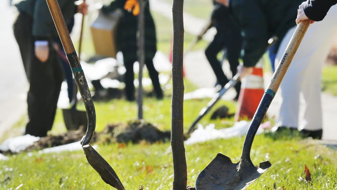 The city of West Lafayette plans to plant trees on South River Road beginning next month. Work will also continue in the fall to replace trees on Sagamore Parkway that have been damaged due to the emerald ash borer.