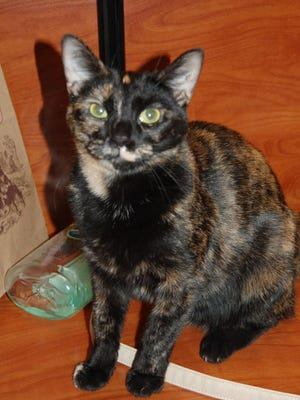 Gidget the Cat hopes for her 'forever home.'