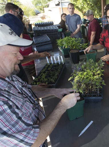 Mesa Community College Urban Horticulture Program Director Peter Conden transplants tomatoes with his students during class on January 21, 2016.