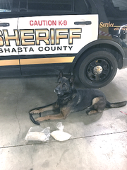 K-9 Thor of the Shasta County Sheriff's Office poses with 2 pounds of suspected methamphetamine that was confiscated Wednesday in a traffic stop near Whiskeytown Lake.