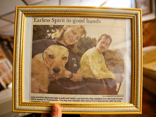 June and Dan Simmons appeared in The York Dispatch April 20, 2003, after adopting Spirit from the York County SPCA. Spirit was found wandering in York City after someone hacked off his ears. He died in October from cancer. The Simmonses have now adopted Angel, a pit bull puppy seized during an SPCA investigation into the beating of her father, Bugz. (Dawn J. Sagert - The York Dispatch)