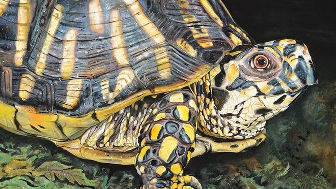 "James Fiorentino's ""Eastern Box Turtle."""