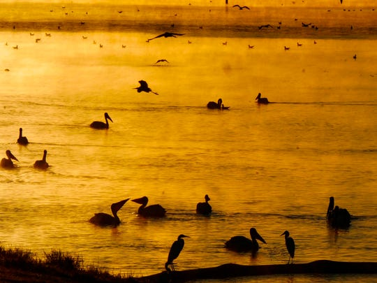 """Honorable mention: """"Pelican Sunrise"""" by Mark Mangham."""