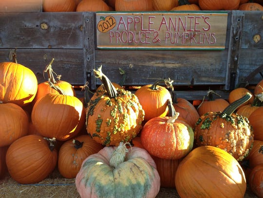 Pumpkins, warts and all, are ready for pickin' at Apple