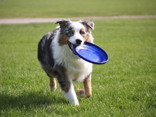 TDS-NBR-0520-Ask-A-Vet-Dog-w-Frisbee.jpg