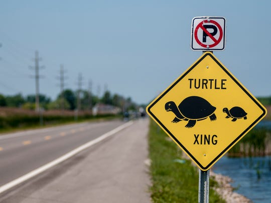 A sign for a turtle crossing is posted along the side