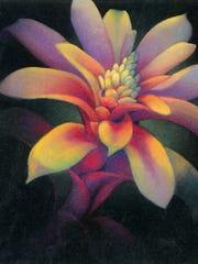 A striking bromeliad in pastels.