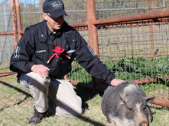 Deputy Cliff Griffin soothes Lucy, a pot-bellied pig, before trying to load her into the pickup of a family that had successfully bid for her Wednesday morning at the Taylor County Detention Center. The deputy enlisted the aid of Taylor the Elf but a rope and crate proved more effective.