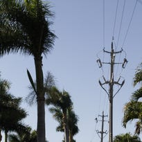 Getting the axe: LCEC to cut down 14 royal palm trees