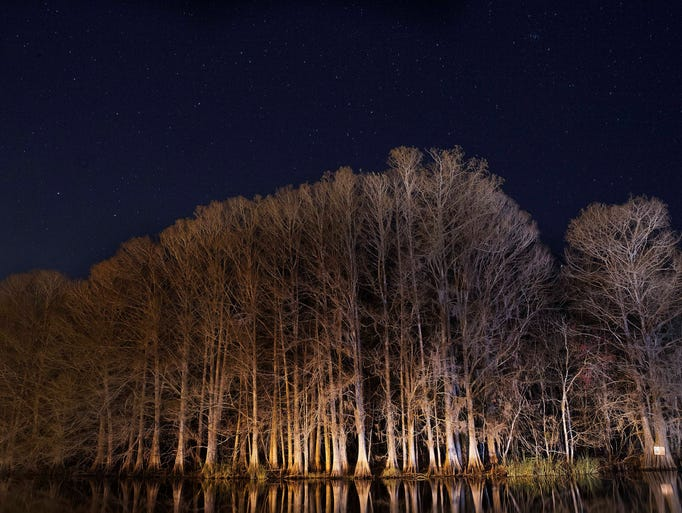Cypress trees spotted at Camp Mack's River Resort.