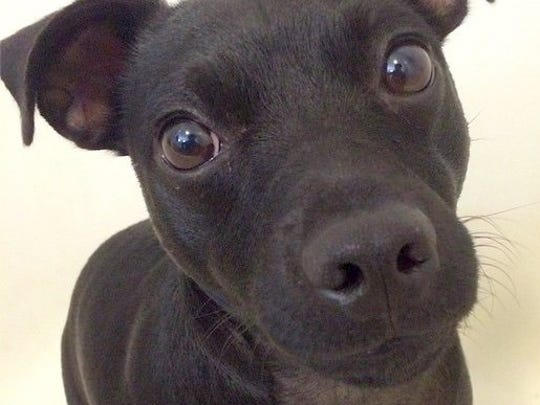 The IRONDOG Fund helped pay for treatment for Reggin, a patterdale terrier owned by Matt Jones.