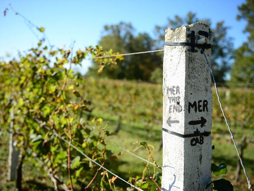 Nassau Valley Vineyard's in Lewes, Del. harvested the