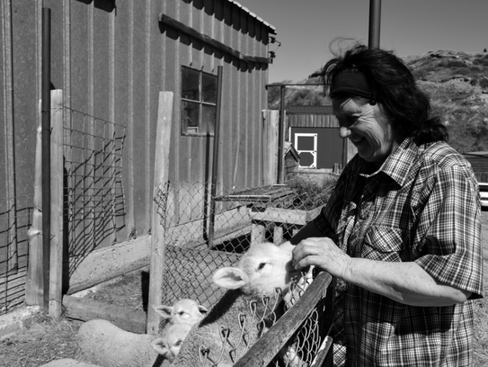 Valerie Wadman feeds lambs on her Bar VW Ranch, located