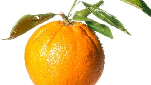 Send some Florida Sunshine with the United Way Citrus sale.