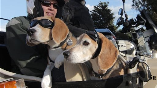 """This Sept. 24, 2014, photo provided by Eric Risau shows Regitze Murat, left, and Philippe Murat with their Beagles Albert and Fernand in their 2010 Ural Gear Up motorcycle in San Francisco. These dogs  are set apart by speed instead of breed and like to fly like the wind in a blimp-shaped bucket attached to the side of a motorcycle. They are highway sidekicks and the stars of """"Sit Stay Ride: The Story of America's Sidecar Dogs,"""" by filmmakers Eric, 38, and Geneva, 29, Ristau of Missoula, Montana.  (AP Photo/Geneva Ristau)"""