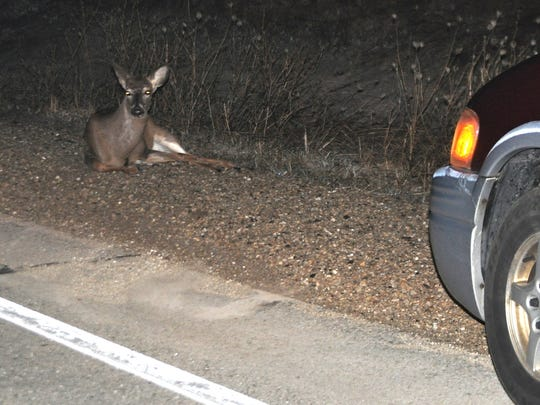 The peak whitetail breeding season has deer on the move day and night, increasing the odds that motorists could be involved in a crash. This doe appeared stunned after running into the side of a van on Wisconsin 54. Minutes later, she got up and bounded off.