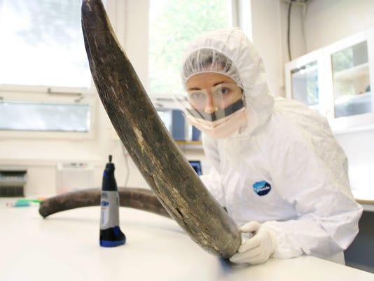Mammoth DNA