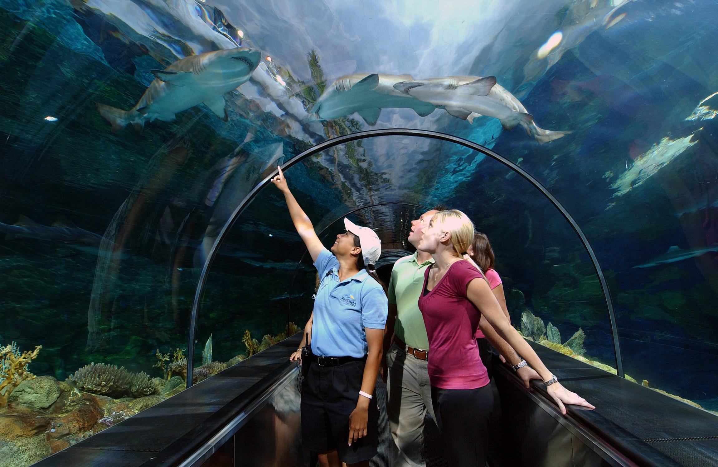 The Shark Tunnel At SeaWorld San Diego.