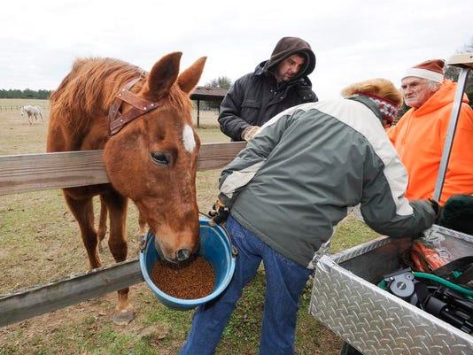 Horse Retirement Farm_Leig (1).jpg