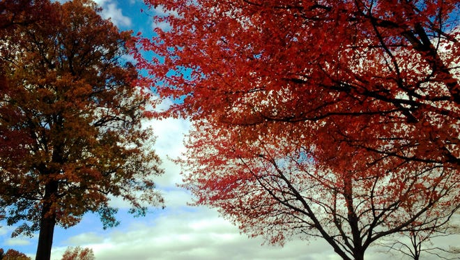 An autumn landscape is seen Friday, October 30, 2015 along Crestwood Drive in Guilford Township.Leaves are showing their brightest colors for the next few week throughout the state.  Markell DeLoatch - Public Opinion