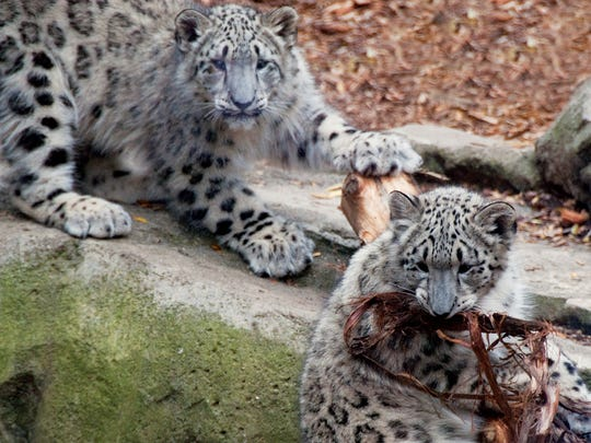 Spend an evening with your sweetheart and sleep over with the locals at the Philadelphia Zoo.