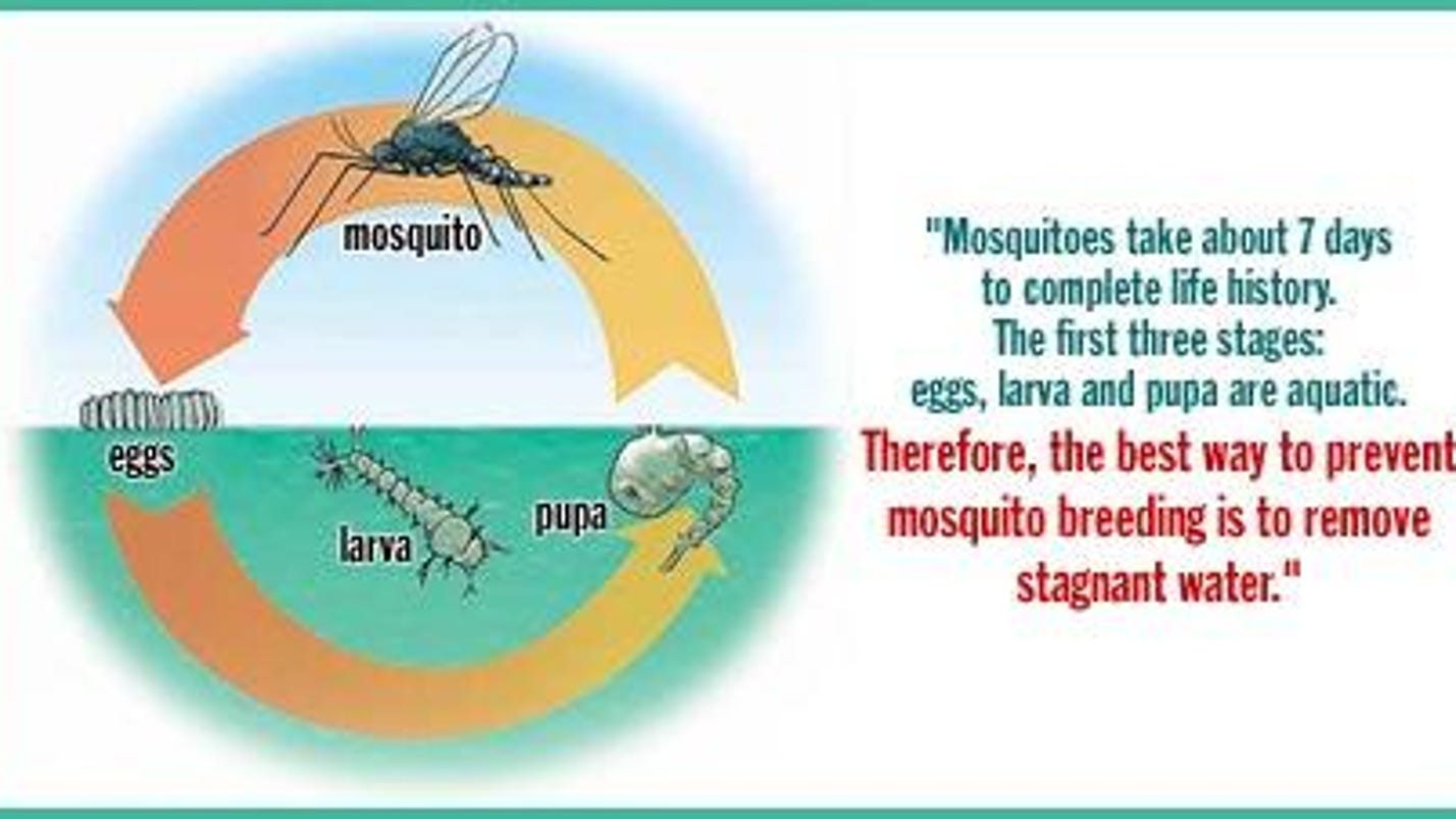 Floods could boost mosquito problems for Piscine 3 05 x 0 91
