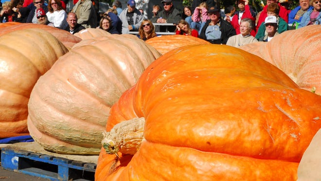 Giant pumpkins are a common sight at the Nekoosa Giant Pumpkin Fest.