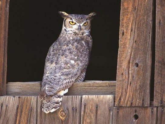 Cincinnati Nature Center Hoots And Hops