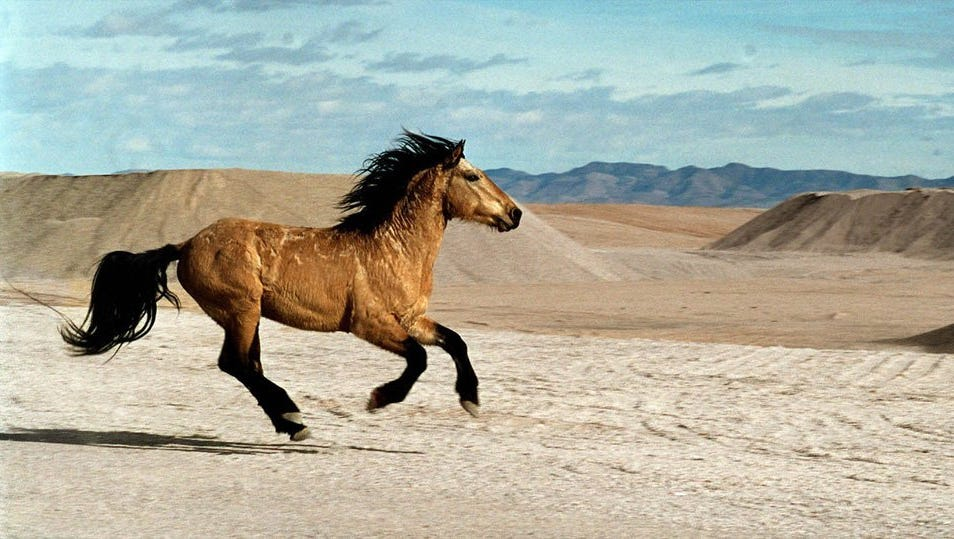 Photos Of Wild Horses Roaming The Fields Of Northern Nevada