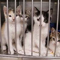 Letter: License pets to ease crowded animal shelters