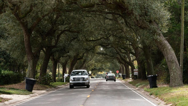 For many local residents, the scenic charm of the 12th Ave. tree tunnel is a signature landmark of Pensacola. For many local residents, the scenic charm of the 12th Ave. tree tunnel is a signature landmark of Pensacola. For others however, the overall health of the more than 100-years oaks is becoming a concern.