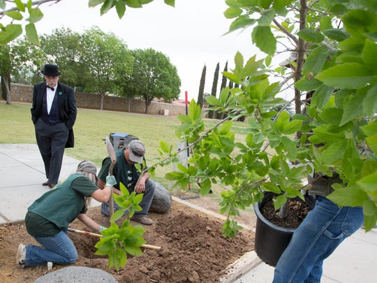 John Mexal, left, dressed as Sterling Morton the founder of Arbor Day, looks on as members of the Las Cruces Tree Stewards Volunteers plant a chinquapin oak tree at Ponderosa Park, Friday April 27, 2018.