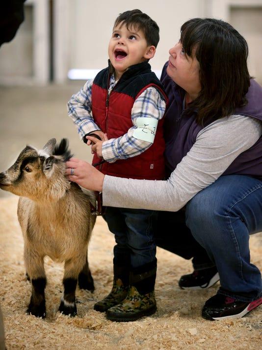 Goat-show-1.jpg
