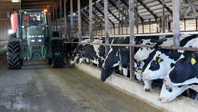 Workers feed cows at Rockland Dairy in Random Lake, Wis.