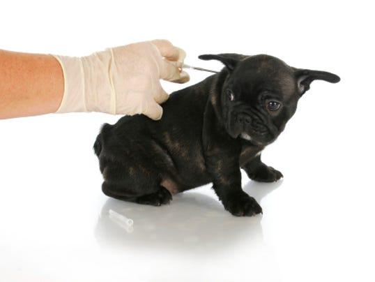 635919147217349991-microchip-puppy.jpg