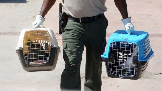 An Animal Care and Control officer from Los Angeles County carries cages containing a cockatoo and a parrot seized from a home on Rancho Lane in Thousand Oaks during a raid last week in which, investigators found more than 70 venomous snakes, several American Alligators and a number of other exotic reptiles.