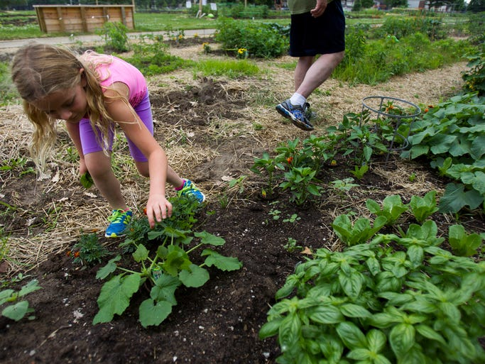 Megan Armstrong looks over a plot of produce her family tends at a community garden behind Carmel Clay Middle School, Tuesday, June 10, 2014.