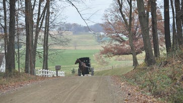 Amish Cook: Going buggy with the Yoders