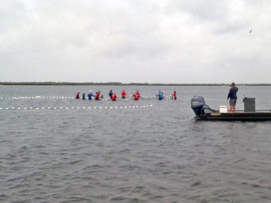 Rescue workers with Sea World and the Texas Marine Mammal Stranding Network close in on a dolphin stranded in the Lighthouse Lakes by low tide.