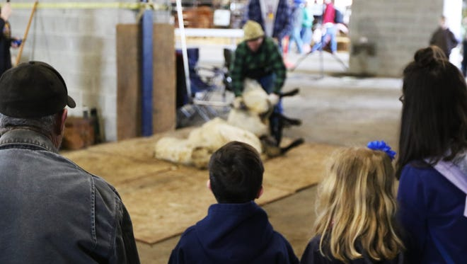 Audience members watch Rick Martin, of Jefferson FFA, shear a sheep at Oregon Ag Fest on April, 28, 2018, at the Oregon State Fairgrounds and Exposition Center.