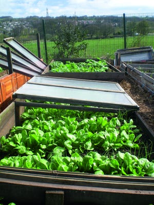 A raised bed can thrive through winter, just add manure before planting. As the manure breaks down, it creates enough heat to warm the soil.
