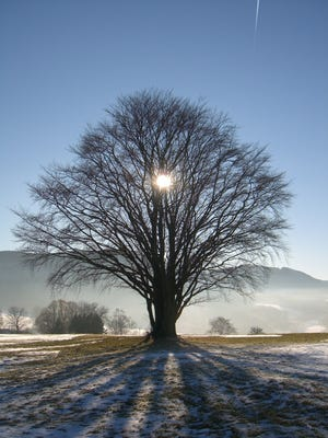 Sun shines through a tree in the Rhoen mountain range in Germany. Dec. 21 is winter solstice for North America, Central America, Europe, Asia and northern Africa.