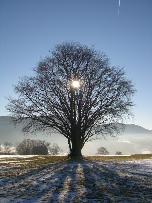 sun behind tree in winter