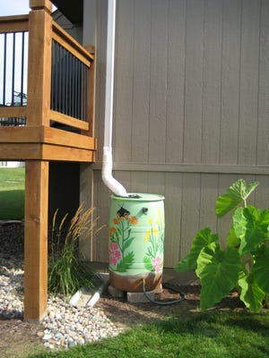 A decorated rain barrel is connected to a downspout in a backyard, where it will capture rainwater for watering garden beds. Rainwater is also better for houseplants. You can simply leave out a bucket in the rain.