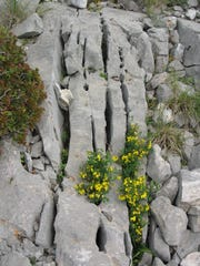 Limestone fractures are eroded by water to form karst formations at a site in Greece.