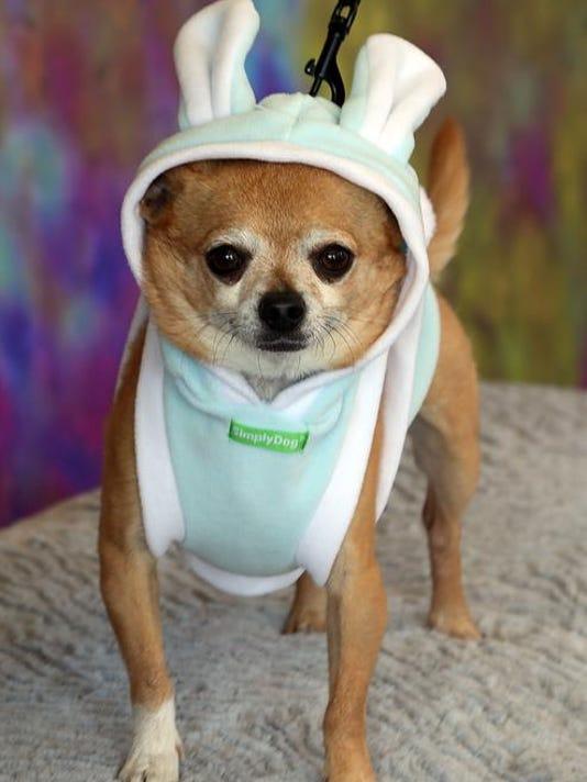 SAL0414-Puppy Passover secondary
